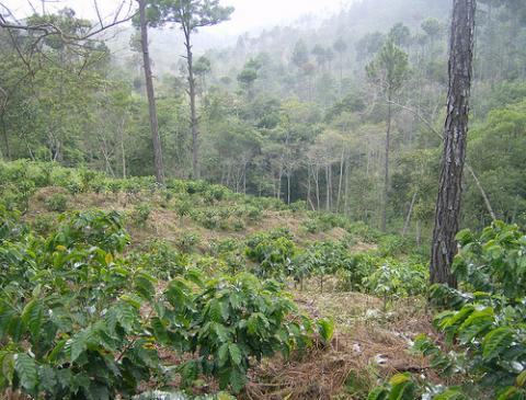 bosque-honduras.jpg